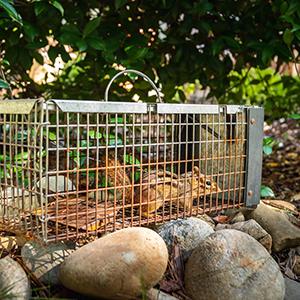 chipmunk in cage