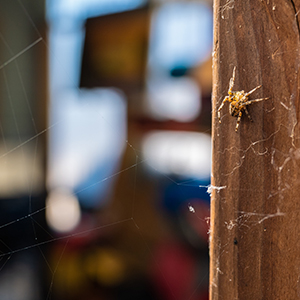 spider on door way