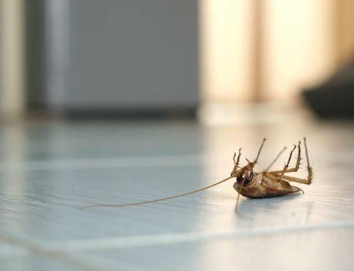 Prevent Pest Control in Ohio