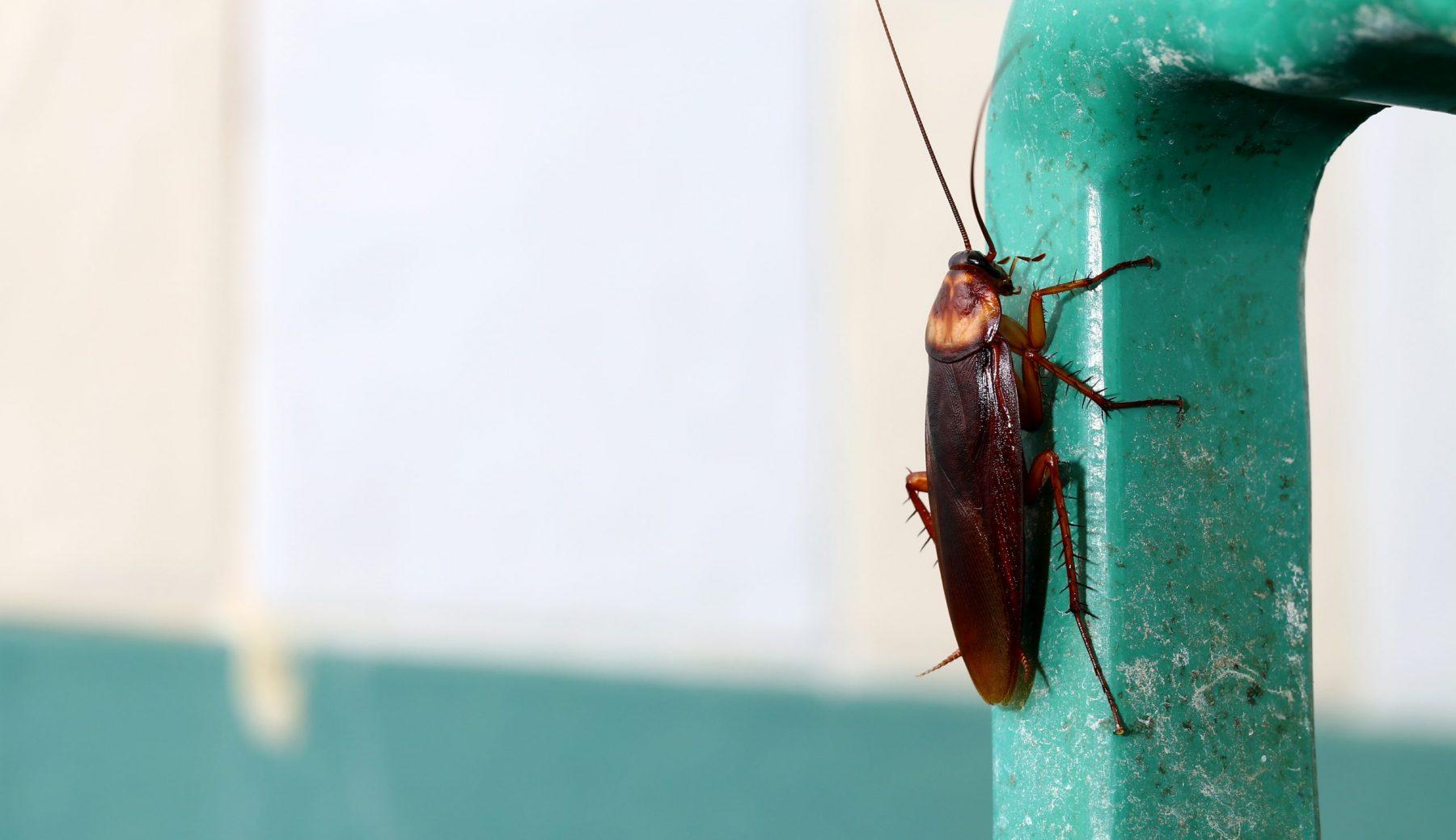 Single cockroach on green handle